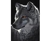Vlk v noci
