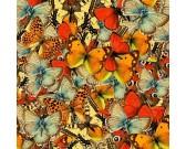 Svet motýľov
