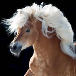 Kôň - MINI PUZZLE