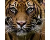 Tiger - MINI PUZZLE