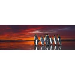Kráľovstvo tučniakov - PANORAMATICKÉ PUZZLE