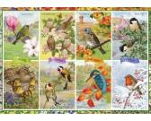 Ročné obdobie - vtáci