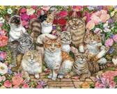 Mačky v kvetoch