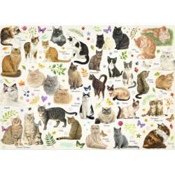 Plagát s mačkami