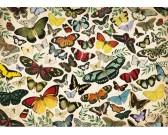 Plagát - motýle