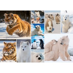 Arktické zvieratá