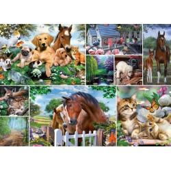 Zvierací svet