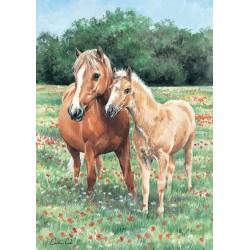 Kone na rozkvitnutej lúke