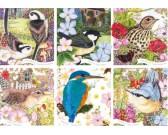 Vtáky našej prírody