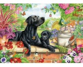 Čierni labradori v záhrade
