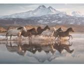 Kone v Kapadokii