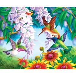 Farebné kolibríky