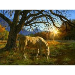 Kôň na pastve