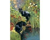 Dve čierne mačky