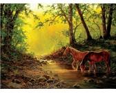 Kone v lesnom potoku