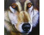 Tvár vlka