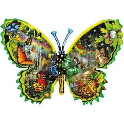 Motýľ - farevný svet motýľov