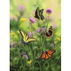 Motýle na bodliaku
