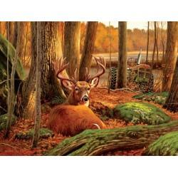 Odpočívajúcí jeleň