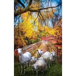 Stádo oviec
