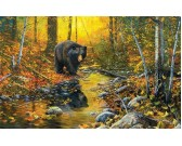 Medveď pri potoku