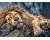 Spiaci lev