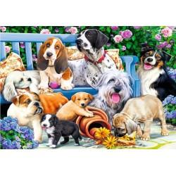 Psi v záhrade
