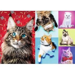 Veselé mačky