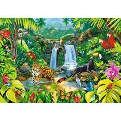 Dažďový prales