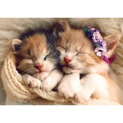Spiace mačičky
