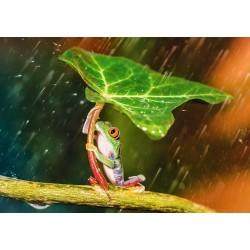 Zelený dáždnik