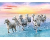 Kone na pláži