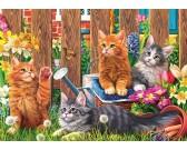Malé mačičky na záhrade