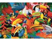 Farebné vtáčiky